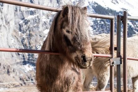 Hest ved Gimmelwald