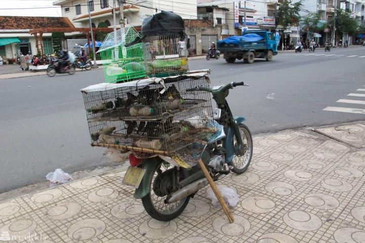 Vietnam: Fugler i bur på moped