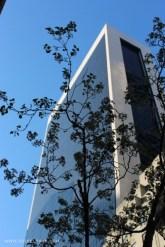 Kirsebærtreblomstring langs 5th Ave.