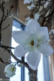 Blomst hos Vestlia Spa Geilo
