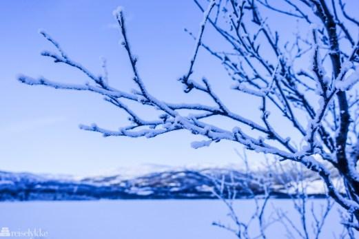 Vinter på Geilo