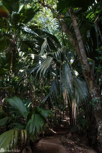 Sti i nasjonalparken Vallée de Mai på Praslin
