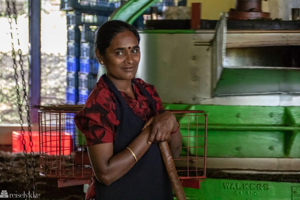 Tearbeider på Blue Fields Tea Nuwara Eliya Sri Lanka