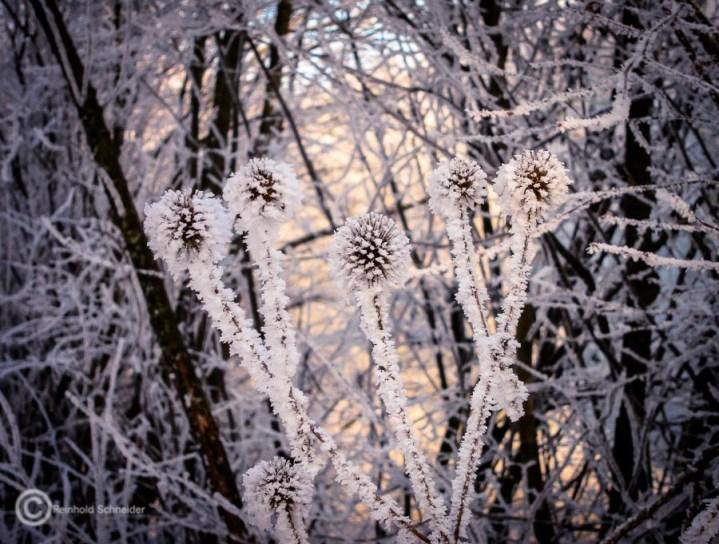 Winter von seiner schönsten Seite