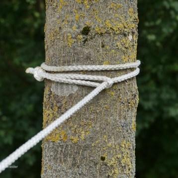 Schritt 1: Das Seil um den Baum schlingen