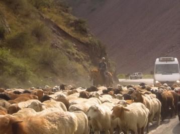 Kirgisistan - auch ein Paradies für Schafe.