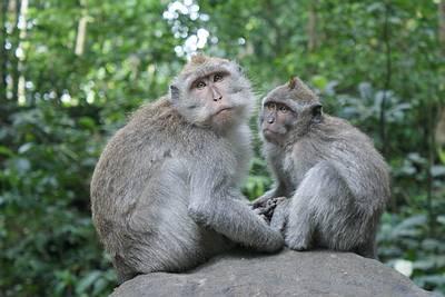 Tierische Bewohner des Affenwaldes in Ubud