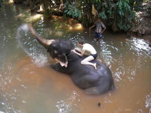 Ganz schoen nass, so eine Elefantendusche
