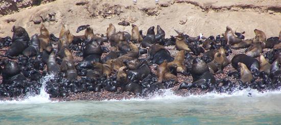 Inseln - Strandbucht für Seelöwen