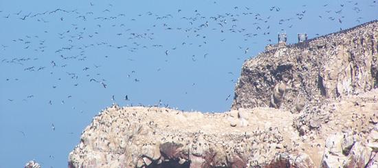 Inseln - übervoll mit Kormoranen und Pelikanen