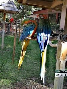 Besuch im Sarasota Jungle Gardens
