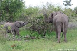 Elefantenfamilie beim Essen