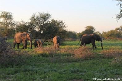 Elefantenfamilie im Krüger Nationalpark
