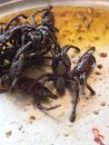 lecker Spinnen... ;-)