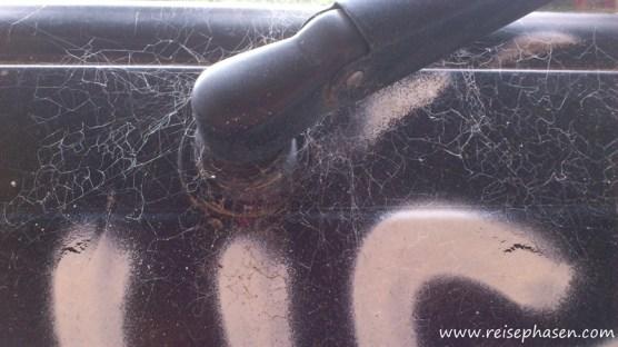 Das ganze Auto war voller Spinnennetze