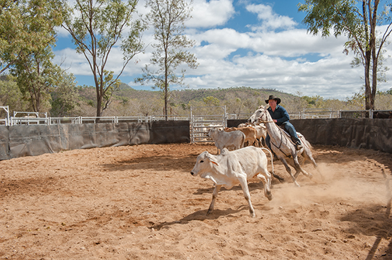 Eureka Creek Rodeo: Vorbereitungstraining