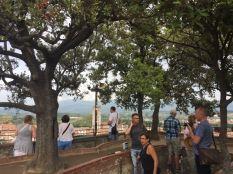Bäume auf der Dachterasse des Torre Guinigi