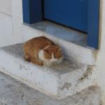 Een katje in Athene