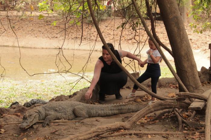 Krokodillen aaien