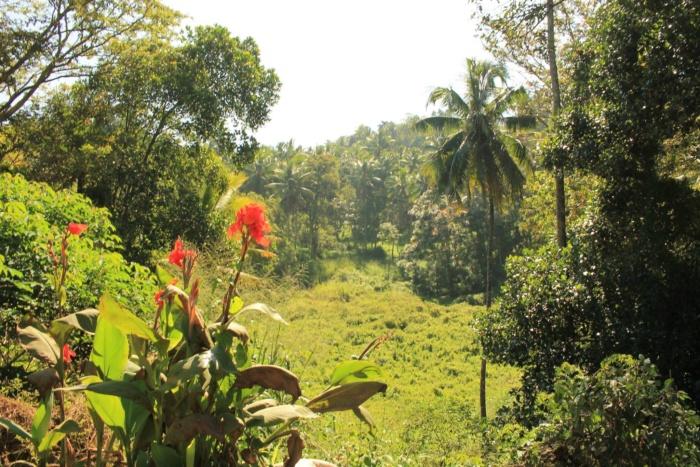 De jungle in Sri Lanka
