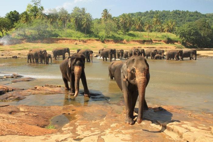 Olifanten in Sri Lanka