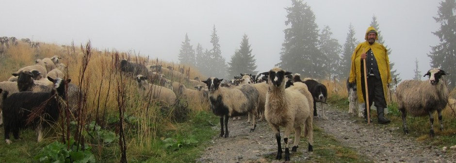Sheepherd Romania