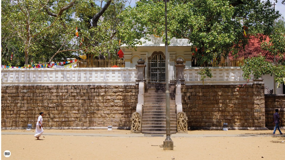Anuradhapura heilige boom