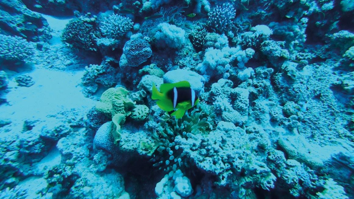duiken in aqaba