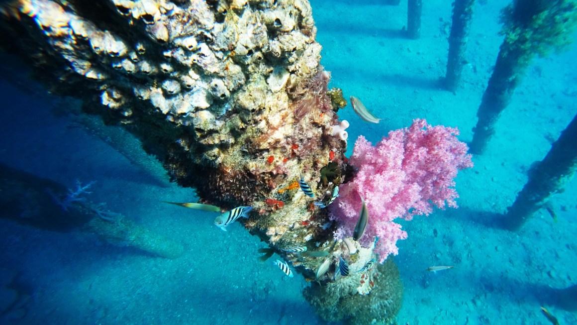 duiken in jordanië