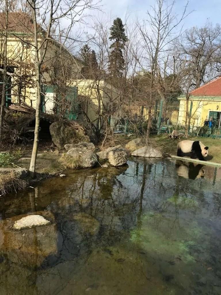 dierentuin panda Vienna Tiergarten
