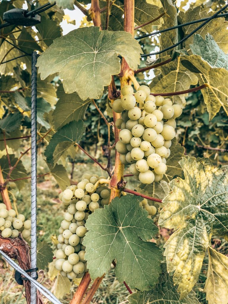 Wijngaarden route Zuid-Limburg