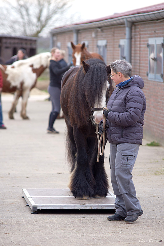 Pferdewaage Foto: Ursula Klarmann