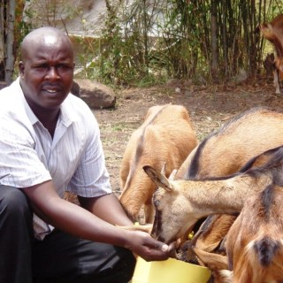 A proud Peter Maina, owner of the goat farm, feeding his livestock at his farm in Kirinyaga County. [Photo: Fred Deya]