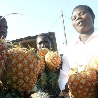 Women pineapple hawkers at Chabera along the Kisumu-Oyugis Road wooing customers to buy their fresh produce [Photo: Odhiambo Orlale]