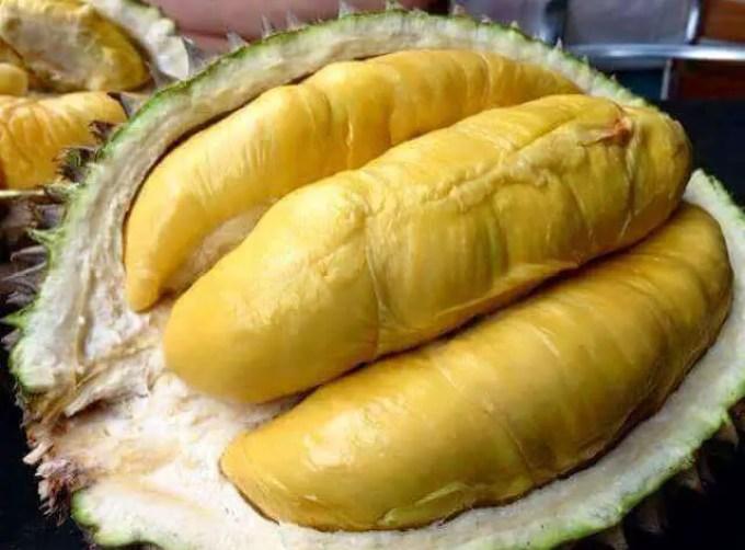 durian-montong-thailand