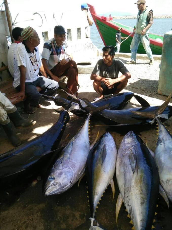 harga ikan tuna di aceh