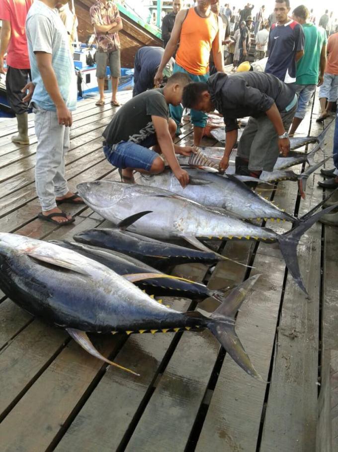 harga ikan tuna di pasar