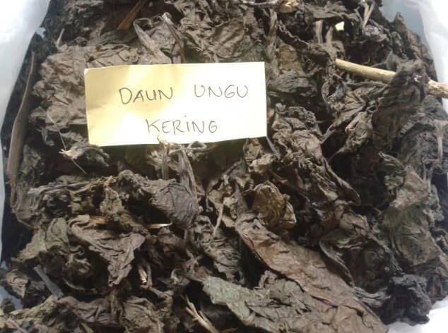 daun ungu kering untuk wasir