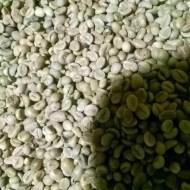 green bean coffee arabika