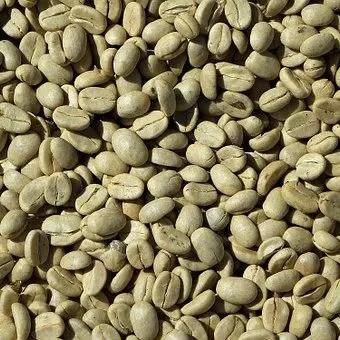 green bean coffee robusta