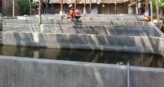 kolam beton ikan sidat