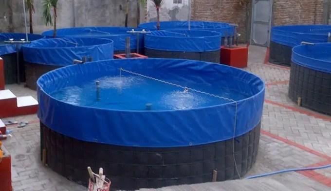 kandungan oksigen untuk ikan sidat