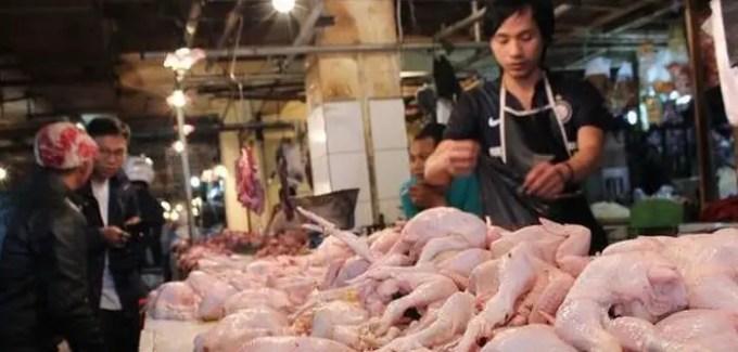 keadaan harga ayam broiler saat ini