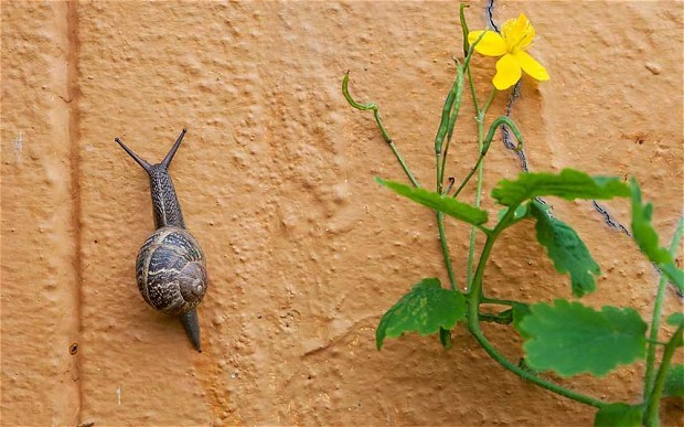 Een slak in de put