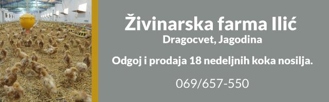 Živinarska farma Ilić – Dragocvet – Jagodina