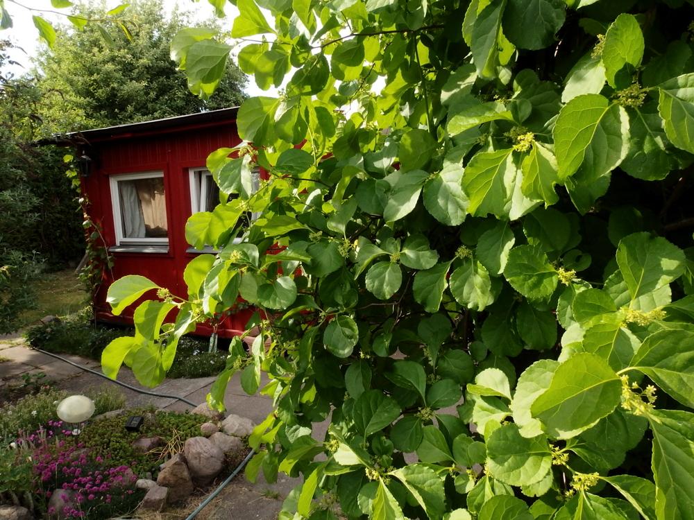Gartenhaus, Bienenweide im Vordergrund