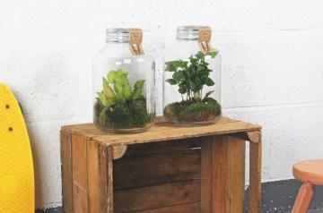 hip groen relatiegeschenk weckpot planten ecosysteem trendy gift