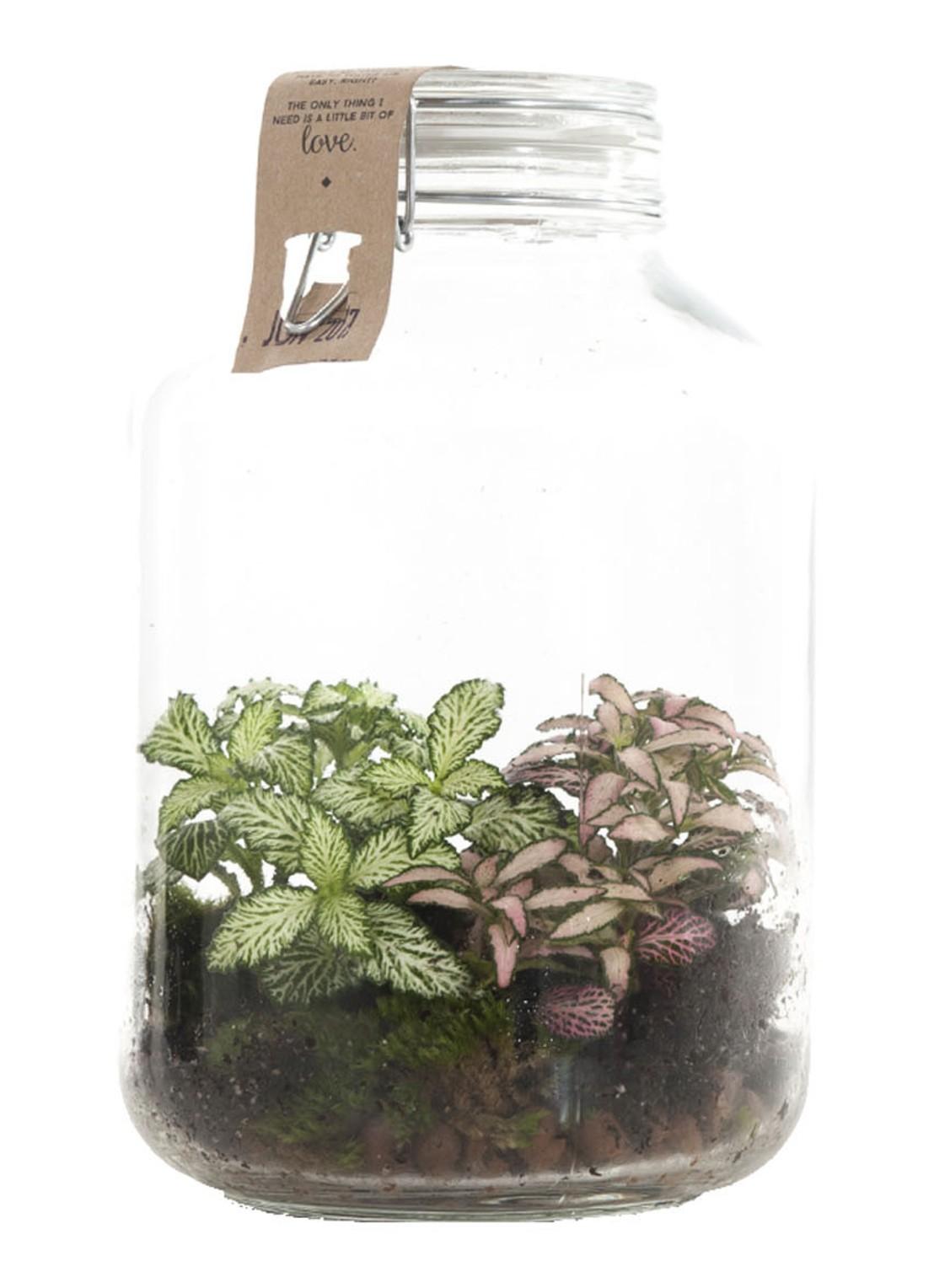 plant in glazen pot hip groen relatiegeschenk idee