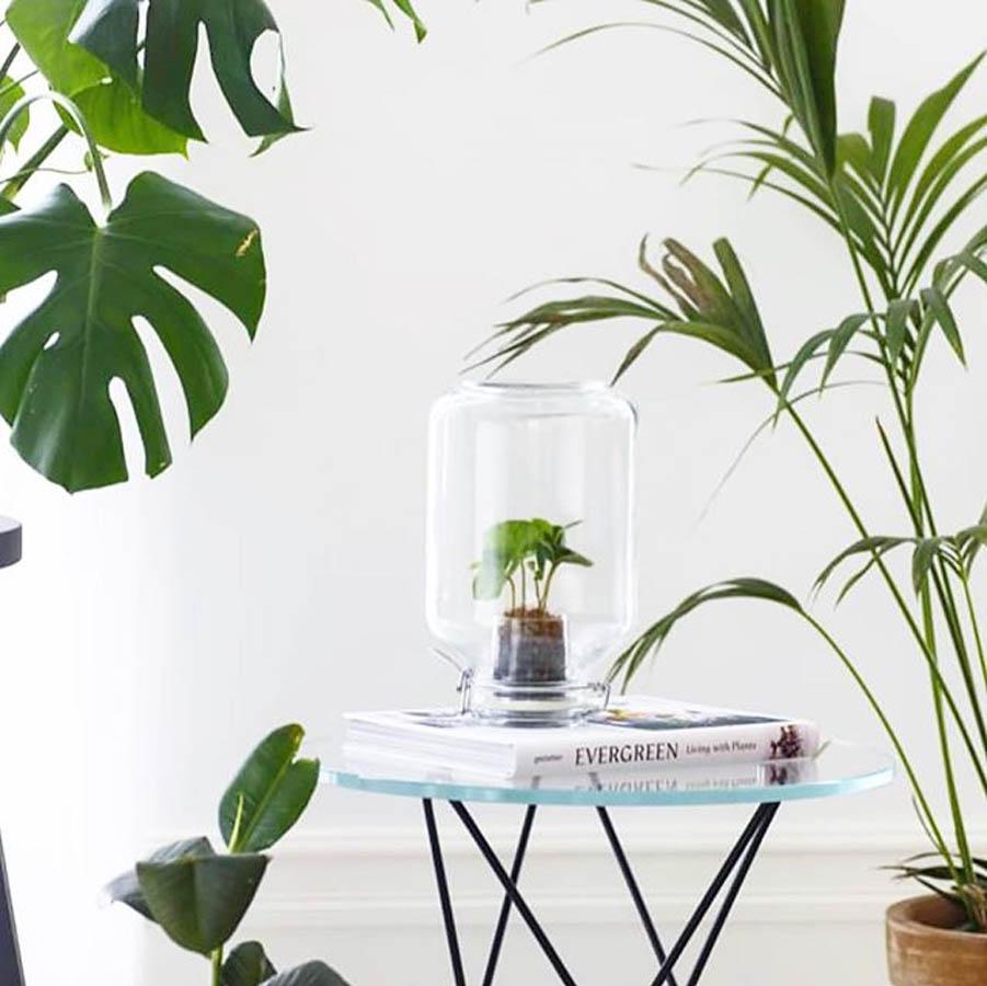 pikaplant weckpot origineel groen relatiegeschenk