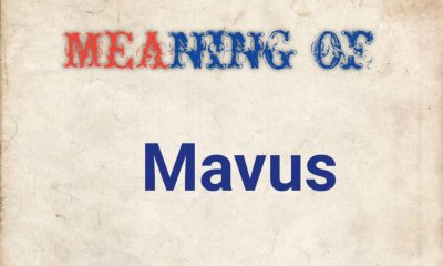 MEANING OF MAVUS
